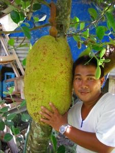 世界一大きな果物ジャックフルーツ(ランカ)