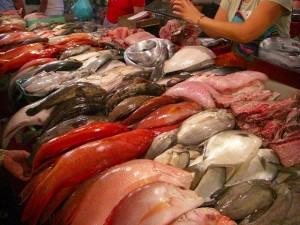 ラプラプ(日本名、はた)、マヤマヤなどの高級海水魚は庶民の高値の花だ