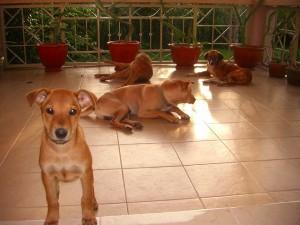 ファームの警備を担当する犬達