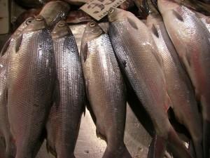 海水と淡水の混ざった水で養殖されるバゴスは養殖魚の横綱だ
